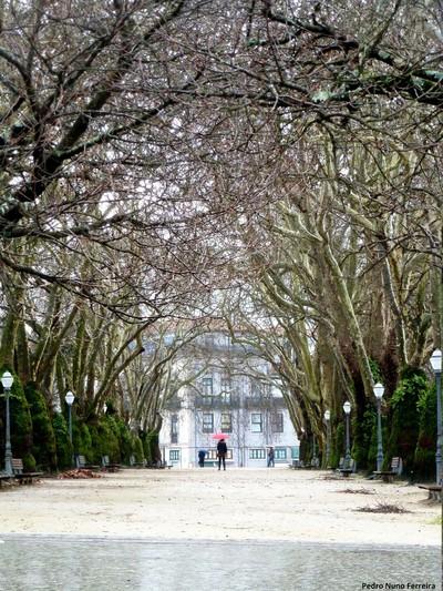 Platanus lane - Jardim João Chagas (Cordoaria) - Porto City