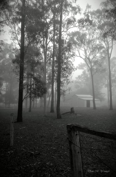 Misty Morning at the Horse Shed