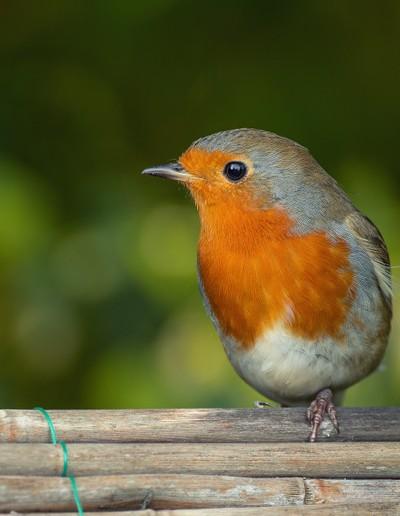 Hello Mr Robin