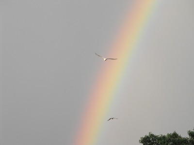 Rainbow and seagulls Wisconsin River