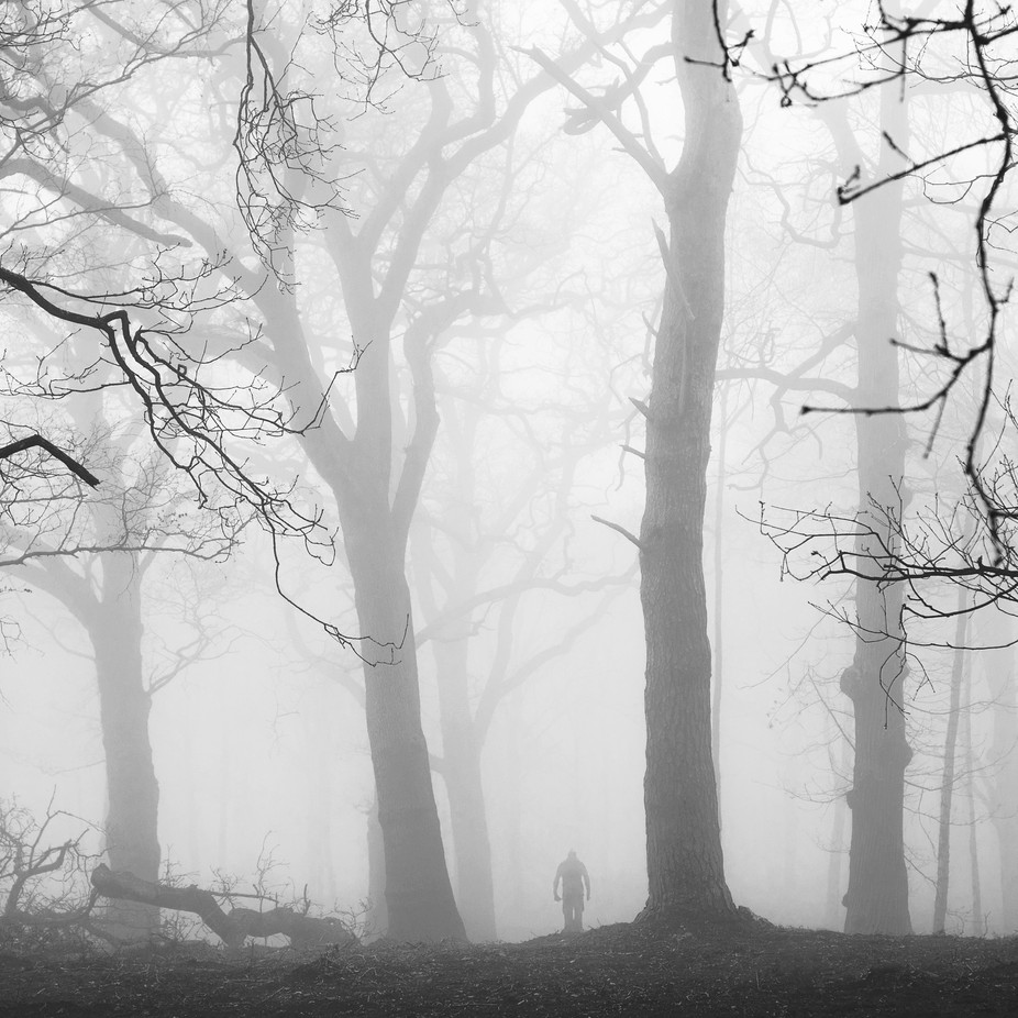 Into the Woods by idahollis - Mysterious Shots Photo Contest