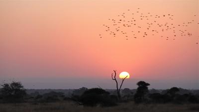 Birds in Flight at Sunset