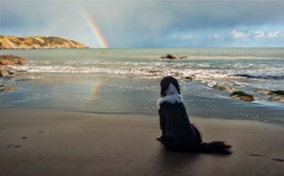 Mansands Rainbow