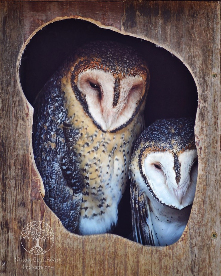 Owls ♥ by sallycampbellclark - My Best Shot Photo Contest Vol 3