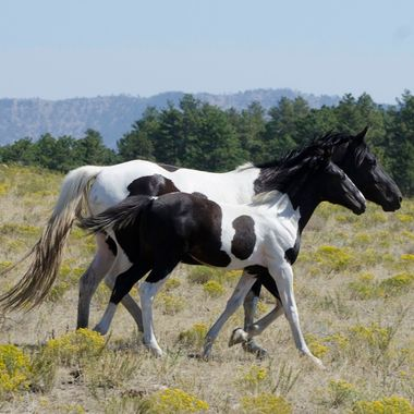 BW Mom and Foal