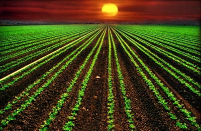 Flower Fields sunset 011a