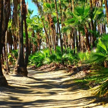 Mexico, the path to the ocean.  Palm Beach