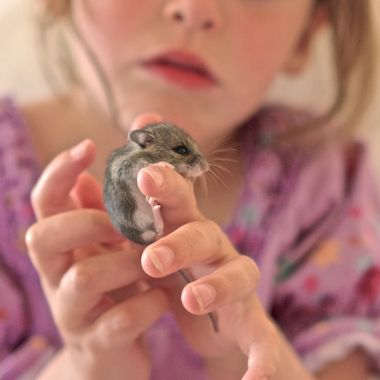 Little girl found a field mouse.