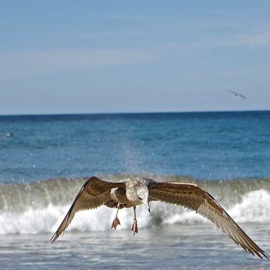 Ocean birds.