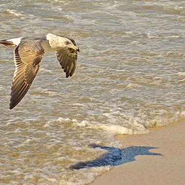 The gull is landing