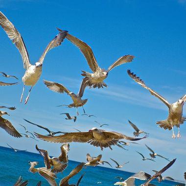 sea birds flying overhead
