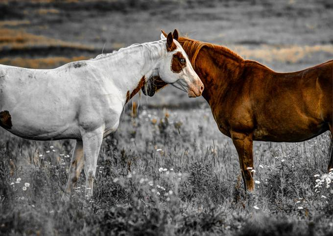 One Eye, Two Horse by JeffSiege - Opposites Photo Contest