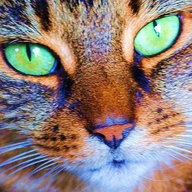 Millie's Cats Eyes