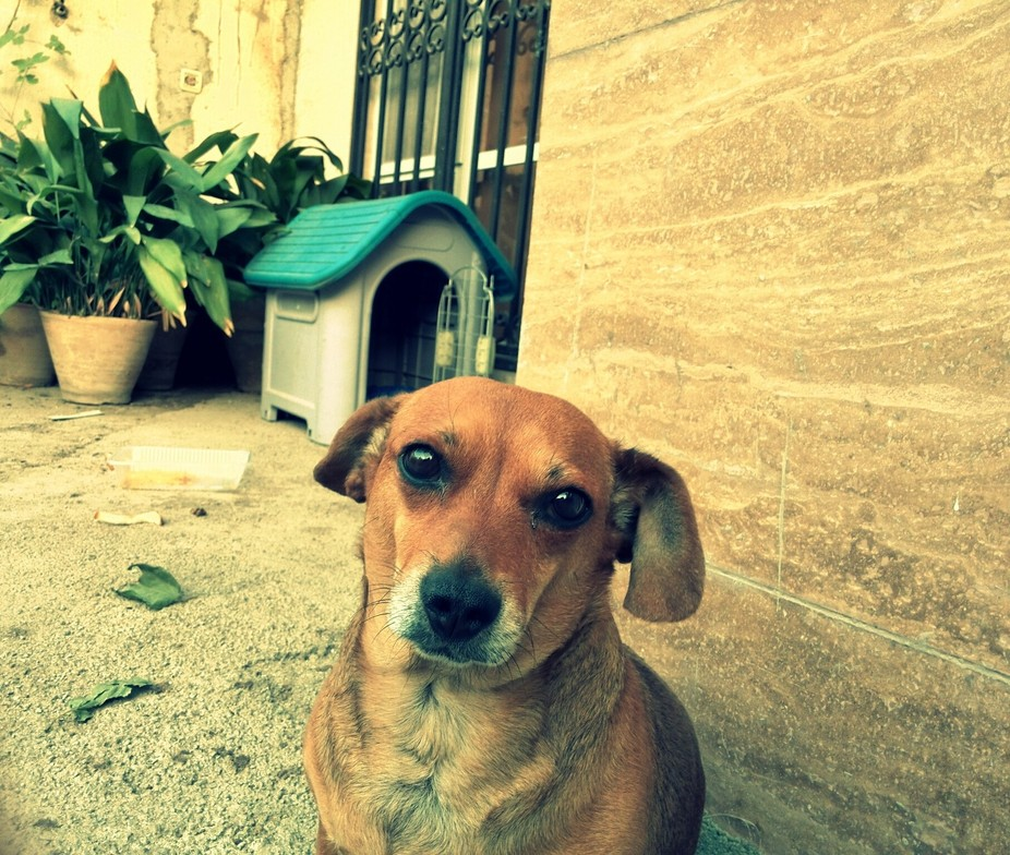 i do all the photo by mt cellphone, this is Miss Korto, a sad and beautiful dog.