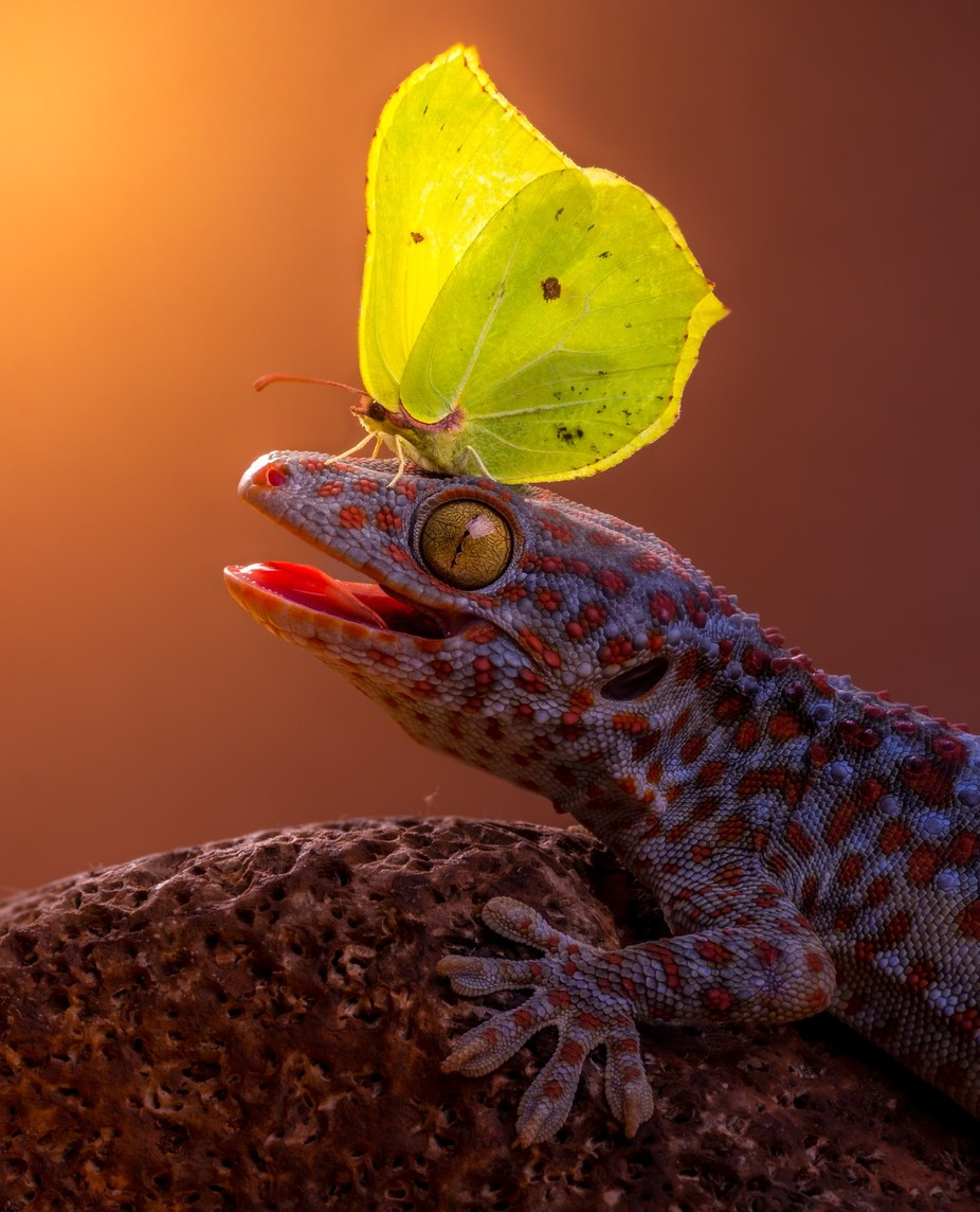 Catch me If you can by kutubuddin - Reptiles And Amphibians Photo Contest