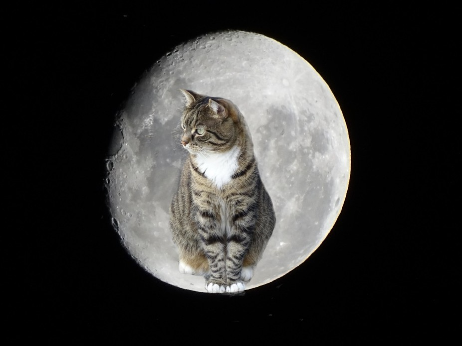 The first photo I took of the Moon -- I then added my cat with Fotomix  -