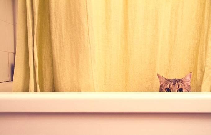 Peek by kmossop - Cute Kittens Photo Contest