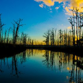 Reflection in the swamp