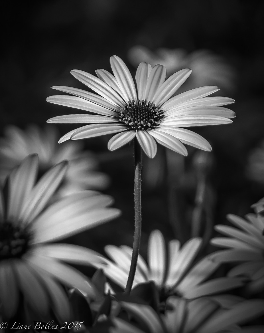 color blind by lianeguerinbolles - A Black And White World Photo Contest