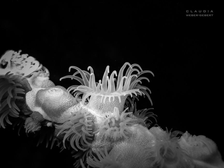 underwater macro in b/w