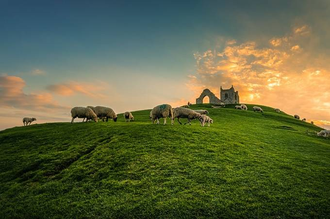 Peacefully Grazing Sheep by artursomerset - Meadows Photo Contest