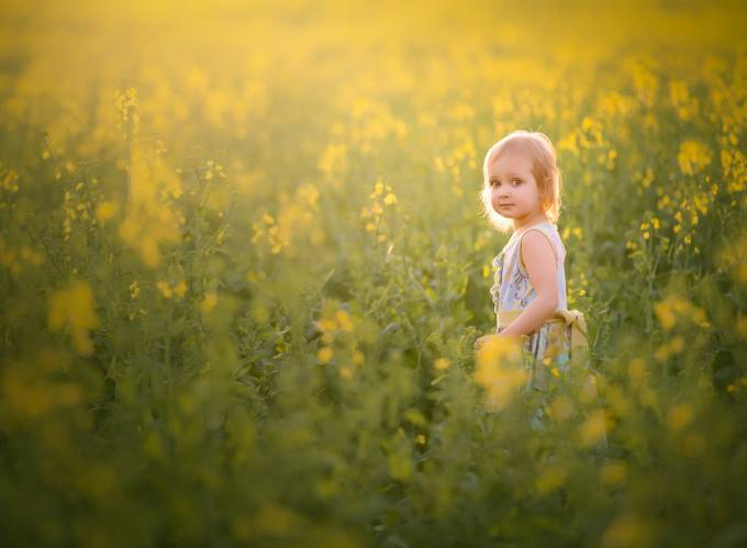 In the Canola by kateluber