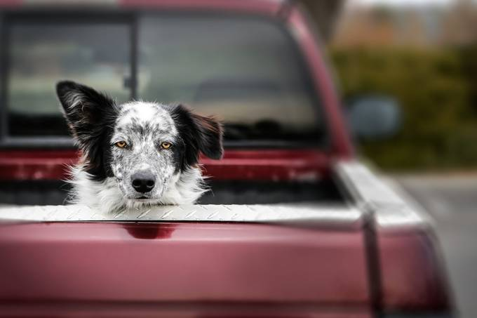 Dog in Truck by Sookool - My Best Shot Photo Contest Vol 3