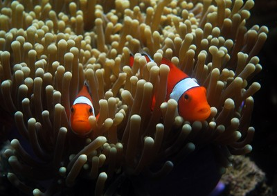 Meeting Nemo