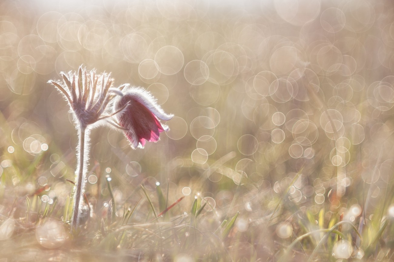 7 Things You Can Learn From This Photo To Improve Your Bokeh Shots