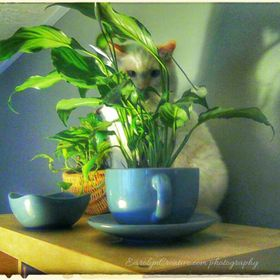 Candid, slightly edited photograph of, rescued Rag-A-Muffin, Cairo Max-A-Million, perched on top of a shelving-unit, peering out from a tea-cup p...