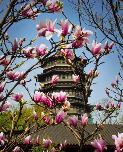 Hangzhou Flowers