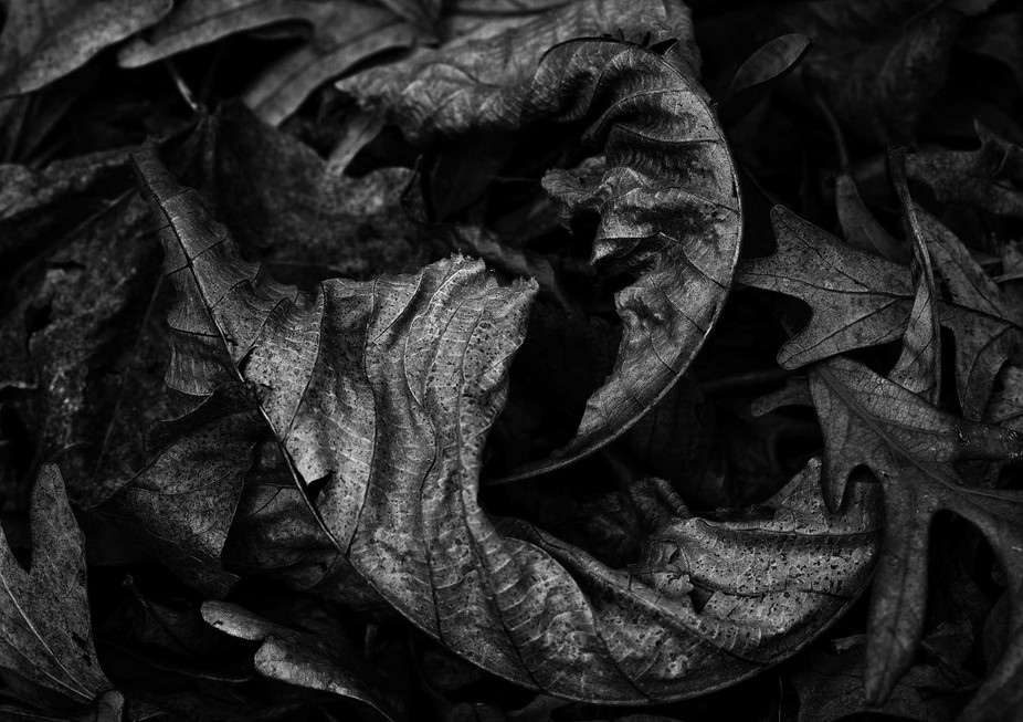 Jester-Park-Leaves