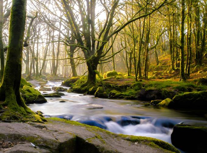 Golitha Falls   Cornwall by Davey - Divine Forests Photo Contest