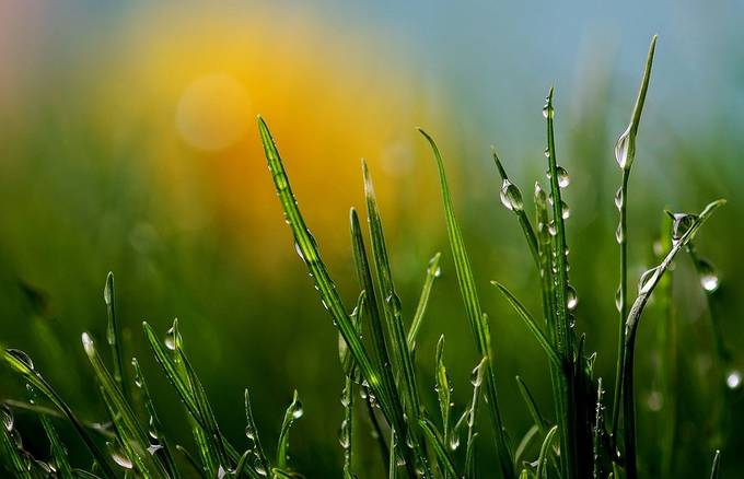 grass by mrspaulding - Stunning POV Photo Contest