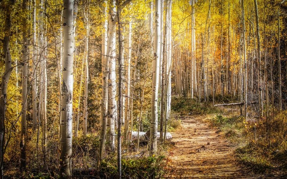 Frisco Path in Autumn
