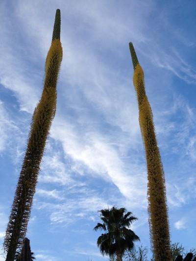 Desert plants reaching sky