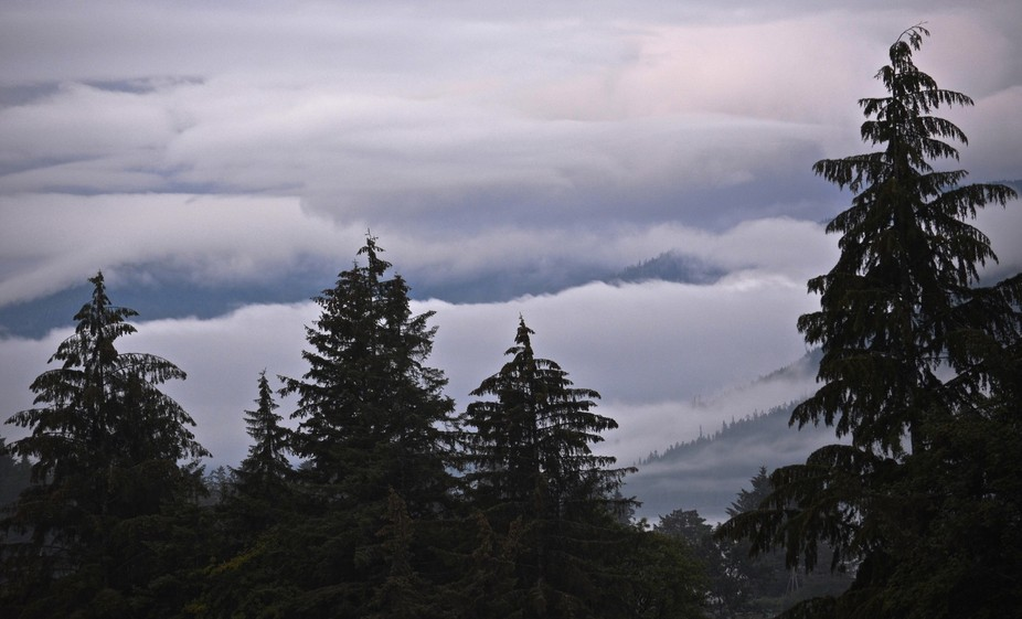 Typical morning during our July stay in Wrangell, Alaska. Cloudy and rainy, I documented what we ...