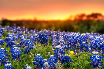 The Colors Of Spring: Photo Contest Winners Revealed
