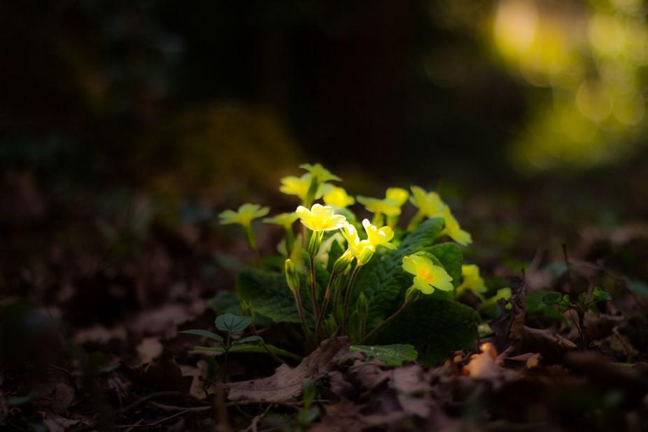 spring reach