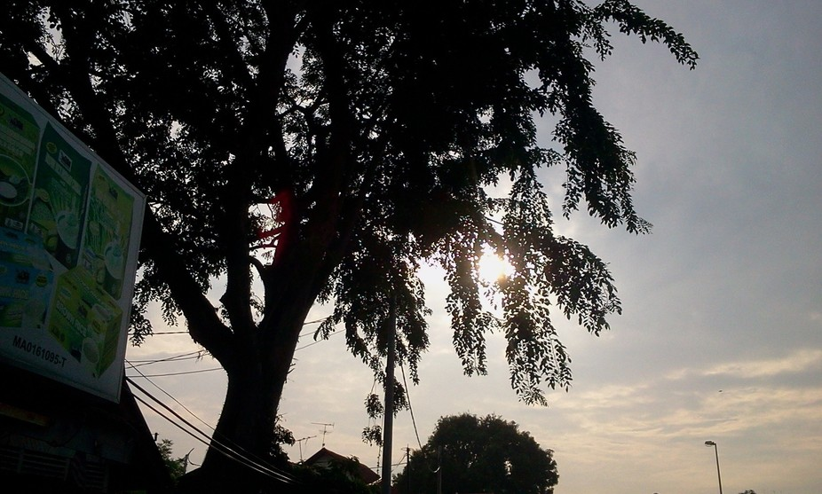melaka_tree1