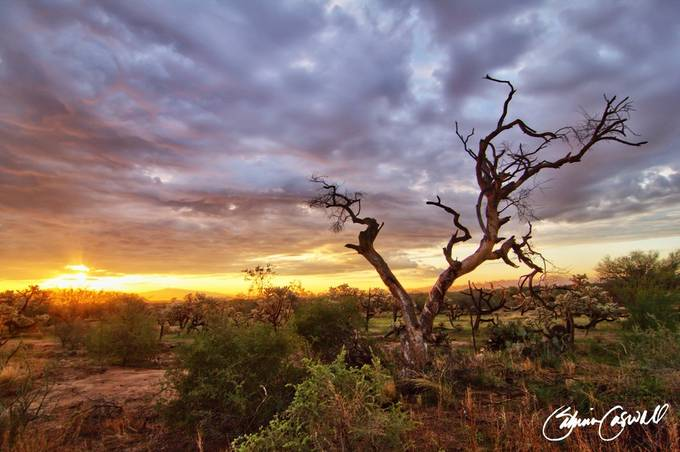 Crooked tree sunrise by imaaok2 - Nature In HDR Photo Contest