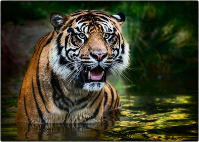 Webinar: Watch Laurie Rubin's Tips For Taking Great Photos At The Zoo