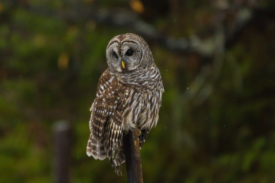 One of our resident Owls.
