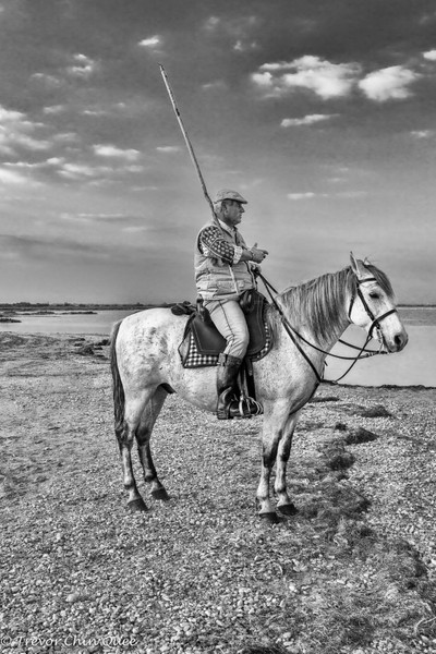 Guardian  of the Camargue