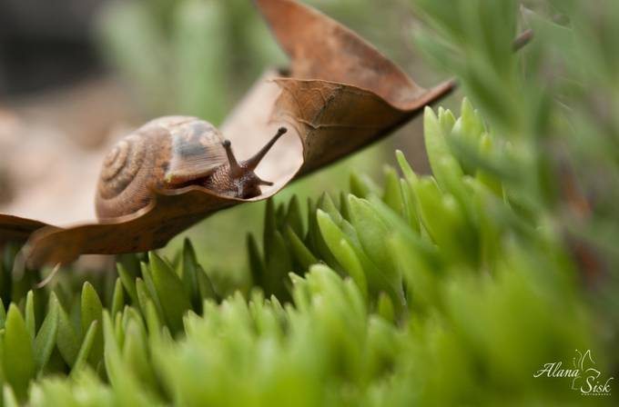 Snail on Leaf by alanasisk - A Low Vantage Point Photo Contest