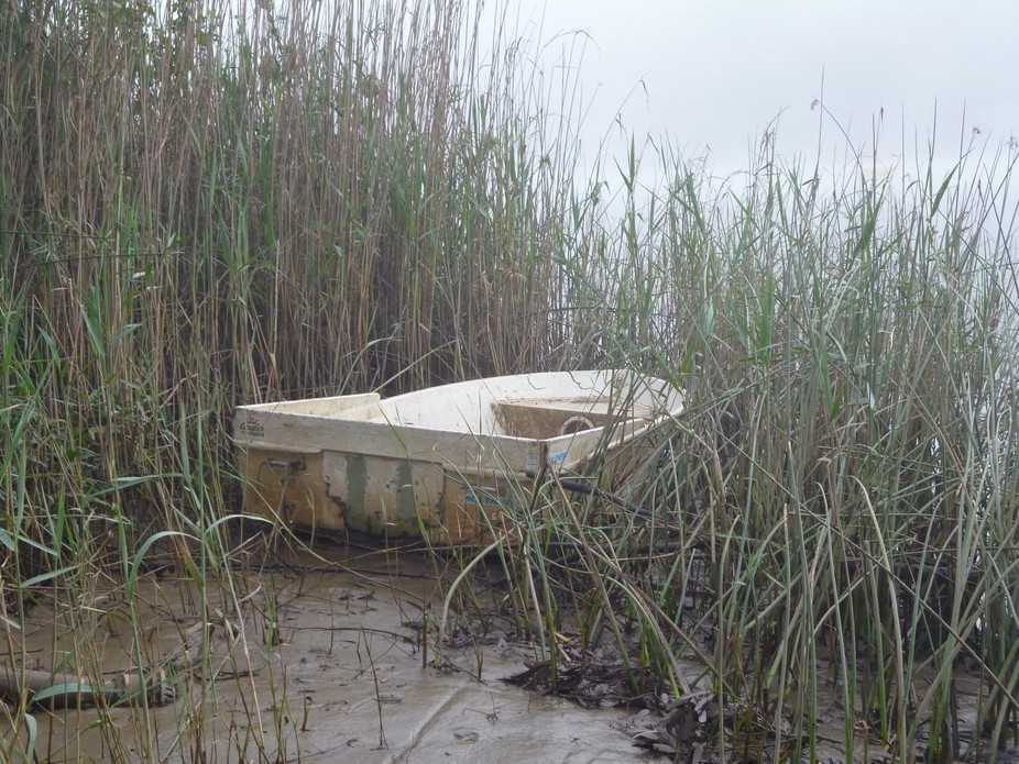 A boat found in the reeds on muddy river bank.