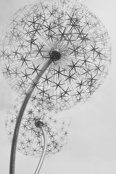 Steel Dandelions