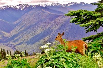deers on top of mountain