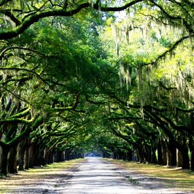 The main road into Wormslow Plantation in Savannah, GA.