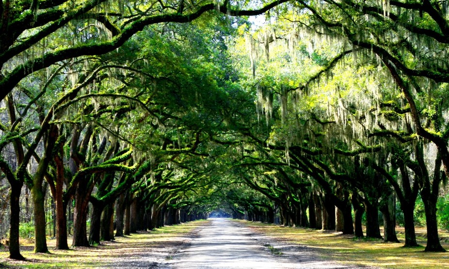The main road into Wormslow Plantation in Savannah, GA.